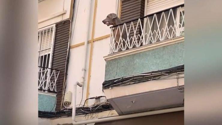 cane balcone gioca pallina video