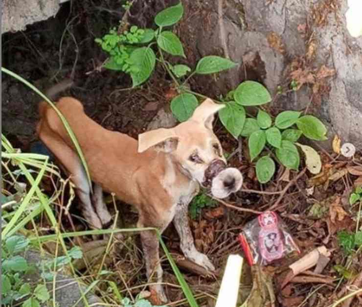 cane sfugge allevamento carni cane