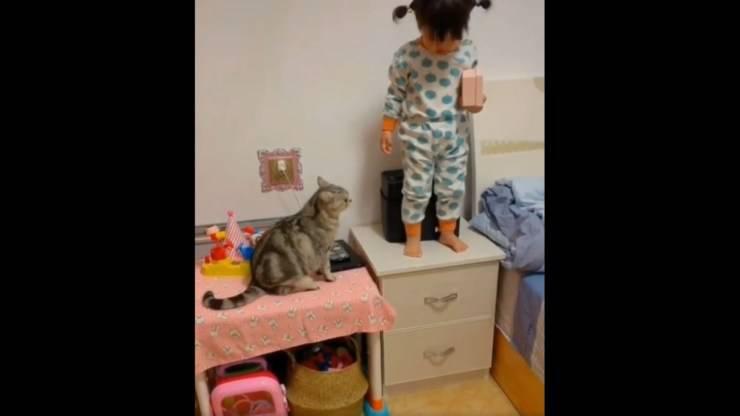 gatto protegge bambina pericoli video