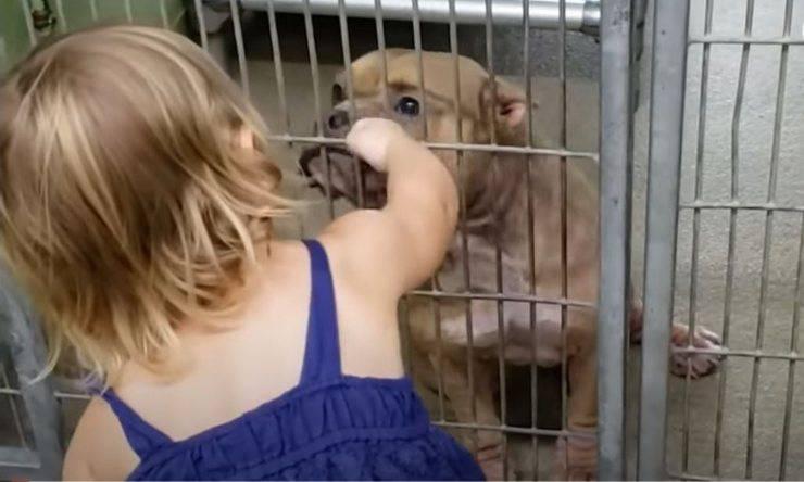 bimba adottare cane pitbull malato