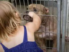 bimba adottare cane pit bull malato