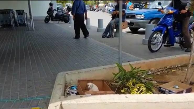 cucciolo cane abbandonato supermercato