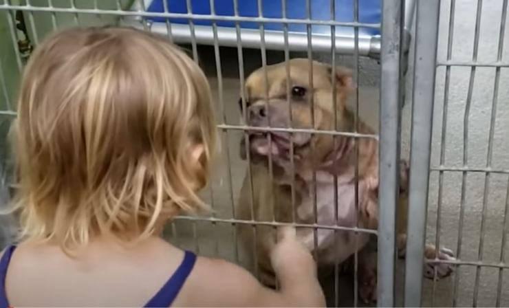 bambina adotta cane malato rifugio video
