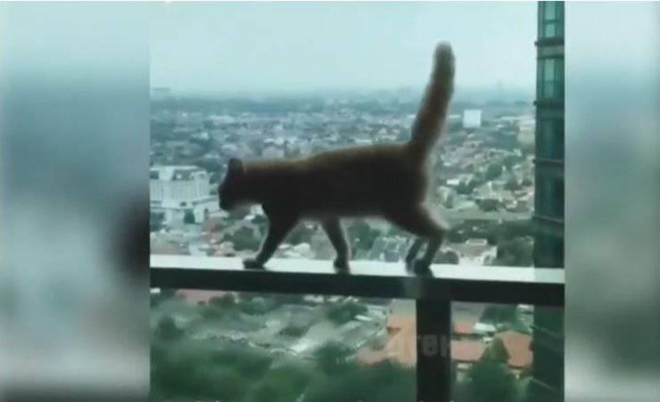 gatto passeggiava ringhiera balcone grattacielo