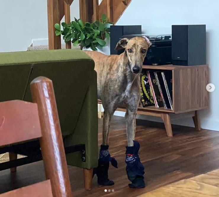 cane non riesce camminare parquet video