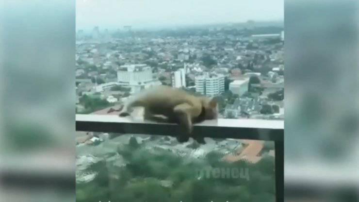 gatto precipitare grattacielo video