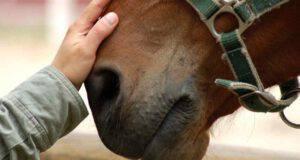 Sinusite nel cavallo