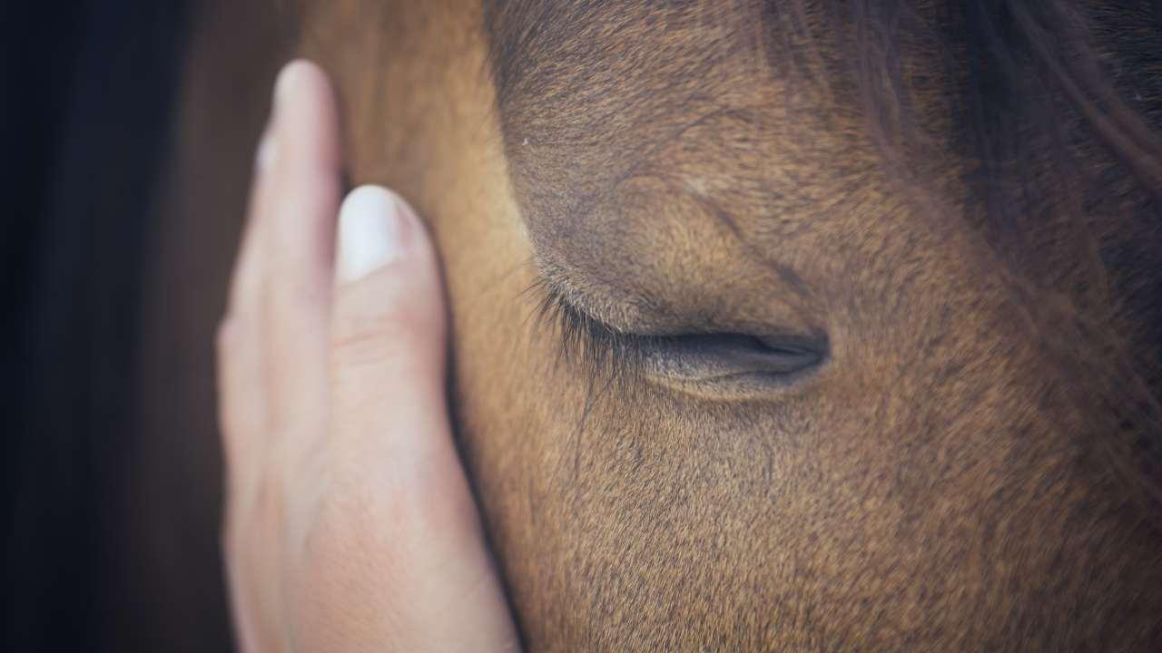 Uveite cronica nel cavallo