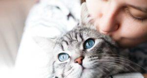 Danno morale per la morte del gatto