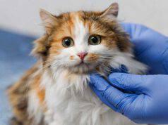 Body post operatorio per il gatto