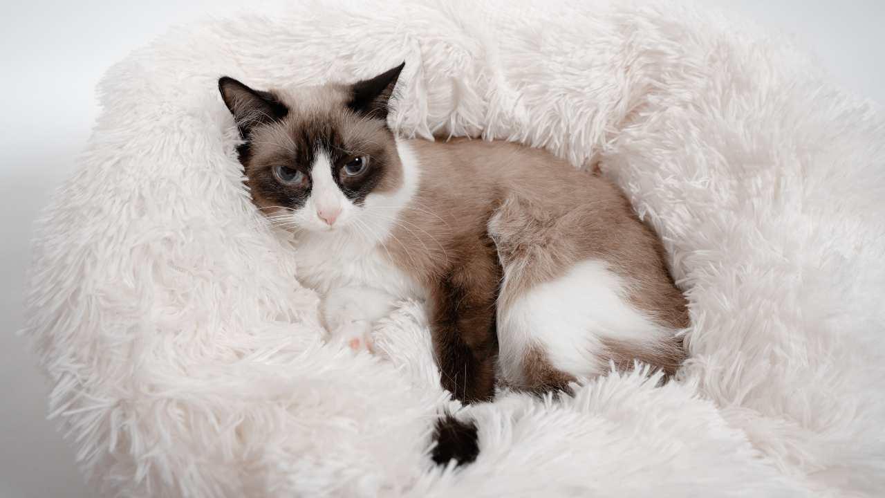 Cuscino per il gatto