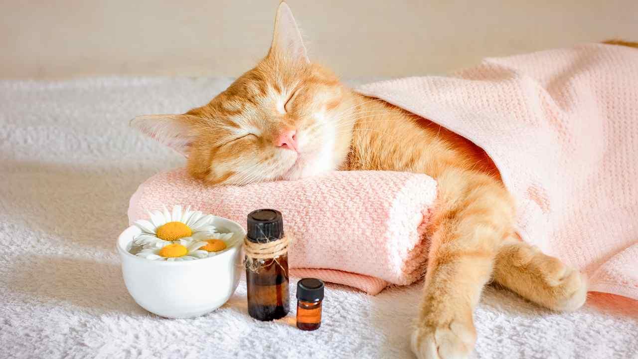 Gli oli essenziali sono pericolosi per il gatto?