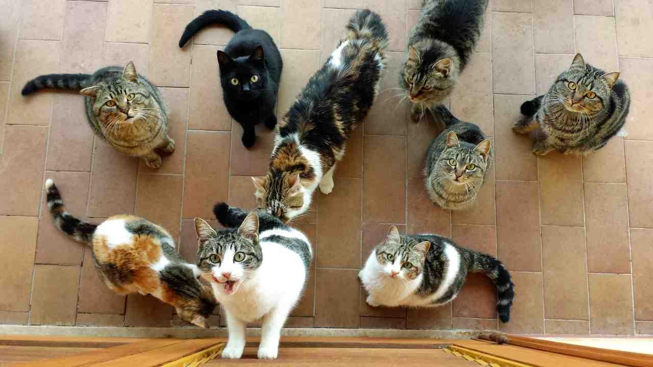 Gestione delle colonia felina