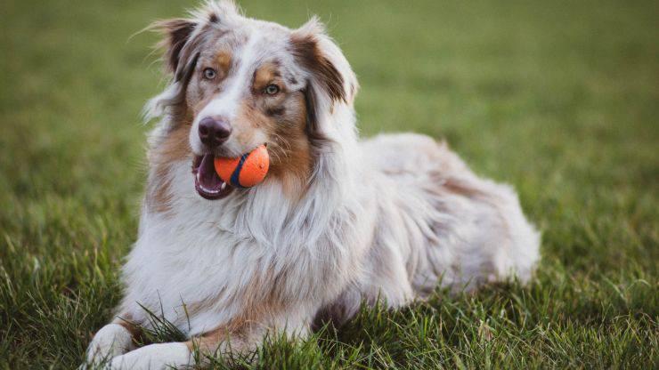 Come insegnare al cane a riportare la pallina