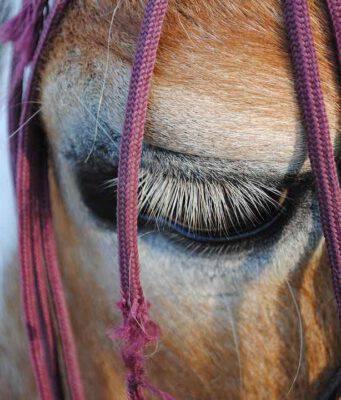 Depressione nel cavallo