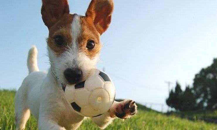 Fido gioca al parco con la pallina