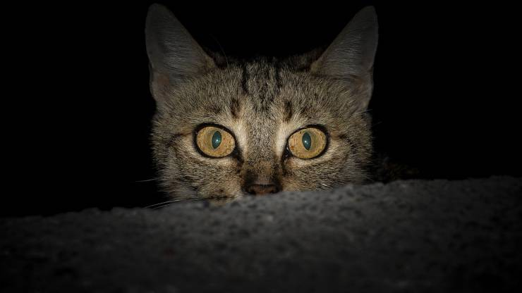 Come insegnare al gatto a dormire di notte