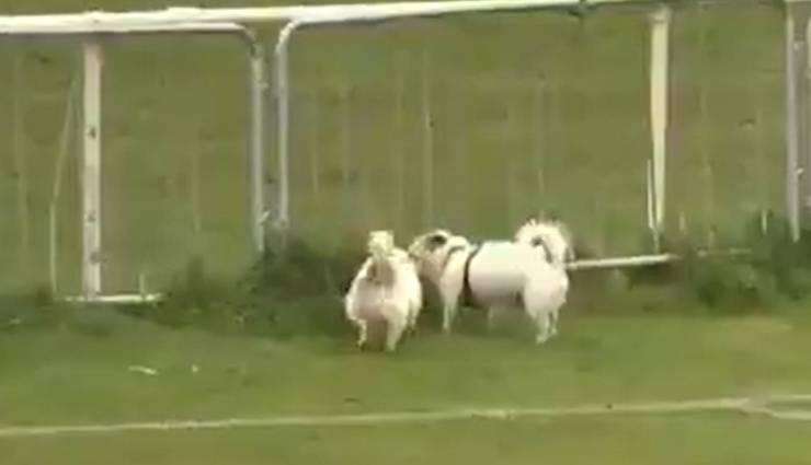 Invasione Campo Cani Pipì Video