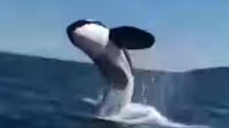 Orca Salto Barca Video