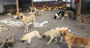 Rifugio 700 Cani