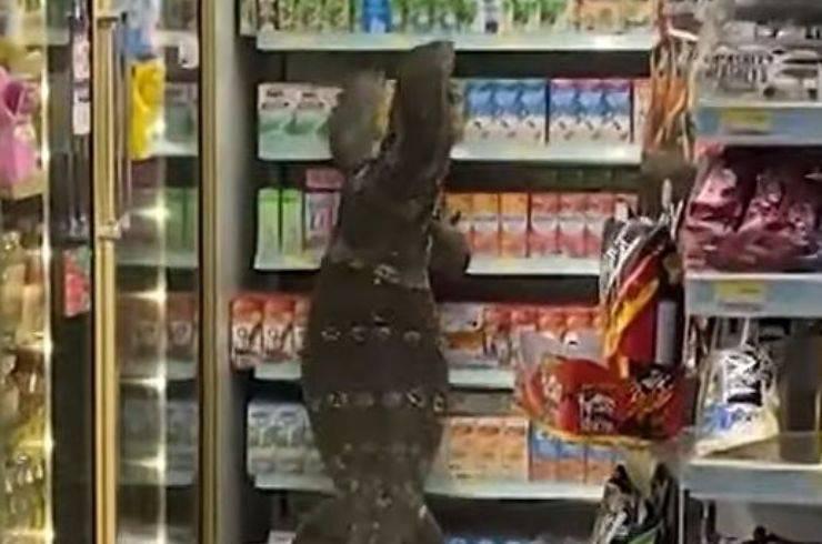 Varano Supermercato Video