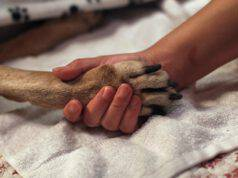 Donna Anziana Testamento Animalisti