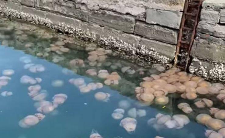 Meduse Video Trieste