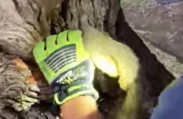 Scoiattolo Testa Incastrata Albero Video