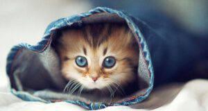 Perché il gatto ha paura della lavatrice