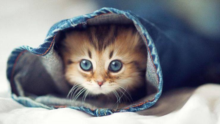 riconoscere gatto stressato