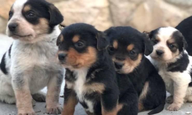 Sette Cuccioli Cane Orfani