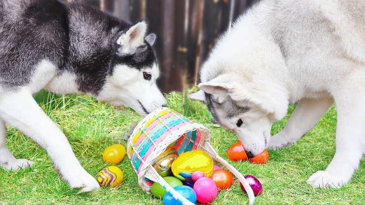 Ricette per Pasqua al cane