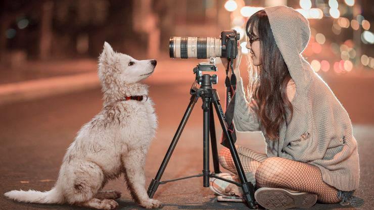 Dog Film Festival Bando