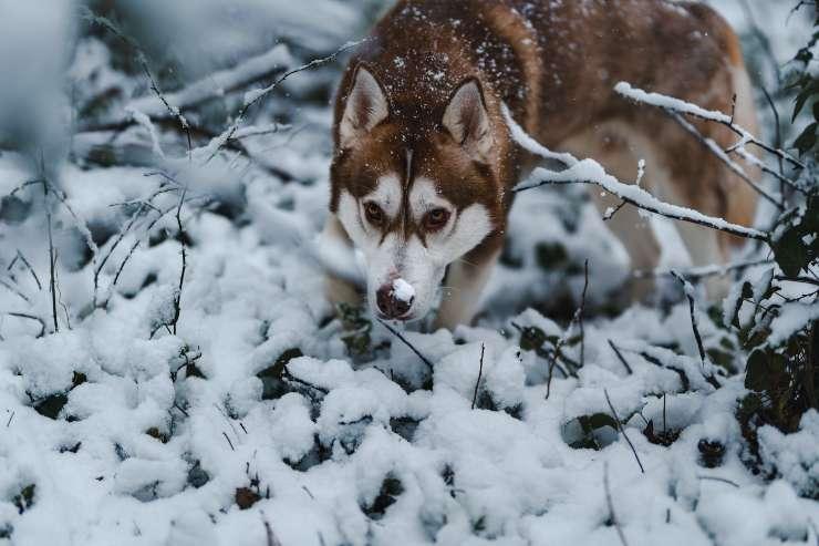 Razze canine che fanno buche