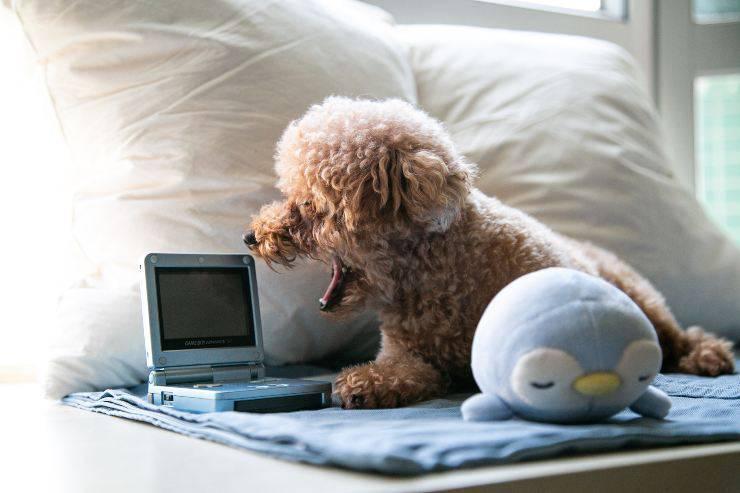 Il cane guarda i cani in tv