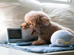 Fido guarda i cani nella tv