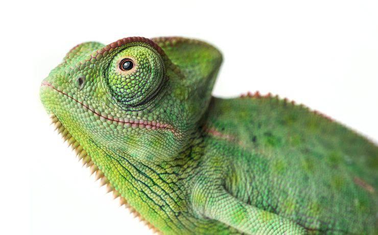 animali verdi