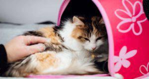 blastomicosi gatto