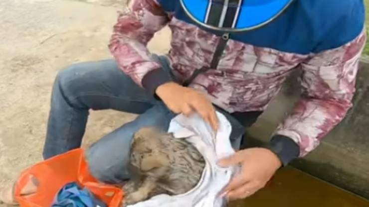 Cucciolo ritrovato (Foto video)