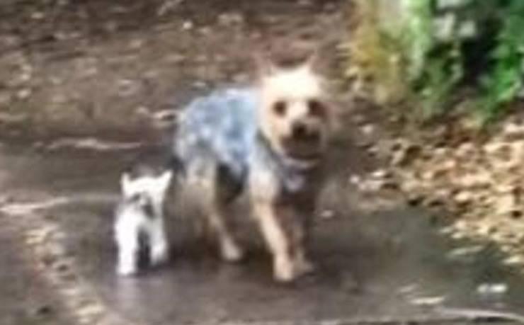 Il cane e il gattino (Foto video)