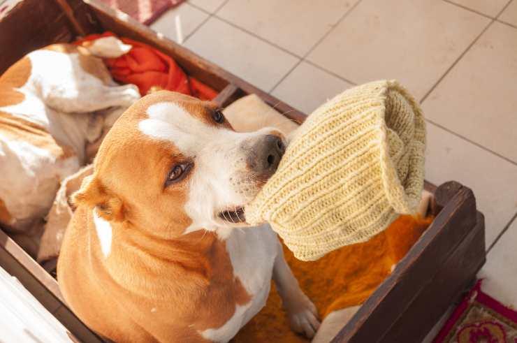 cane con calzino