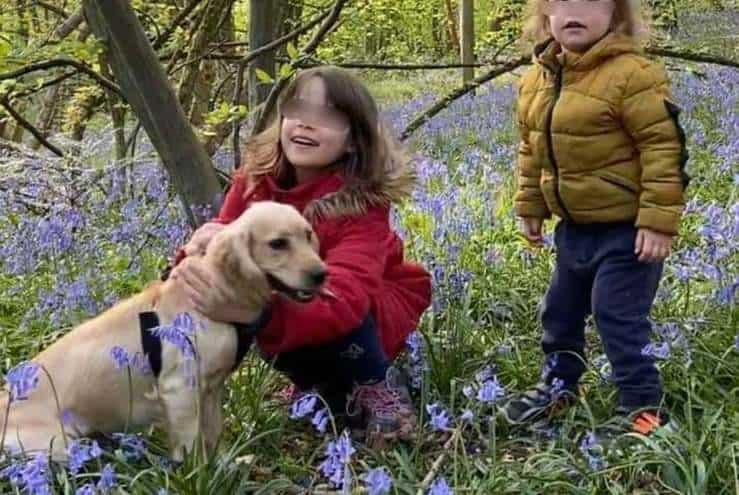 Il cane rapito e tornato misteriosamente a casa marchiato come il bestiame (Foto Facebook)