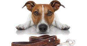 cane paura guinzaglio
