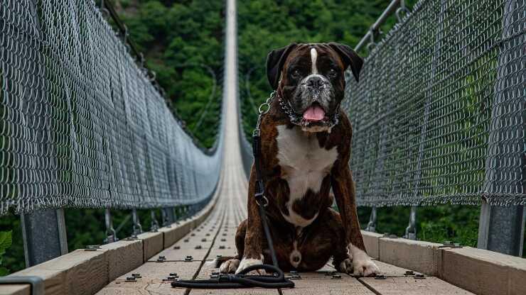 cane paura vuoto