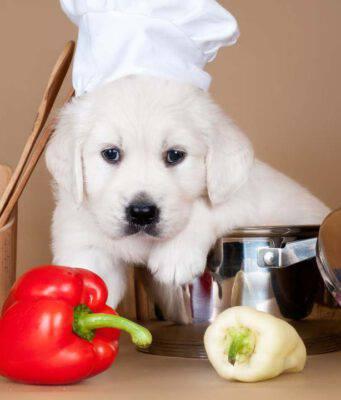 cane puo mangiare peperoni