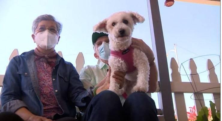 Veterano con il cane