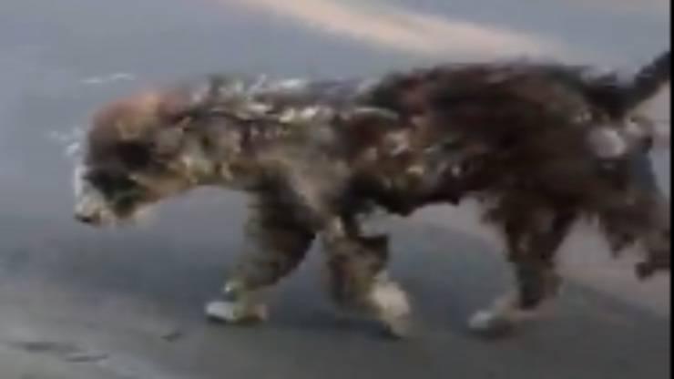 Cane in pessime condizioni (Foto video)