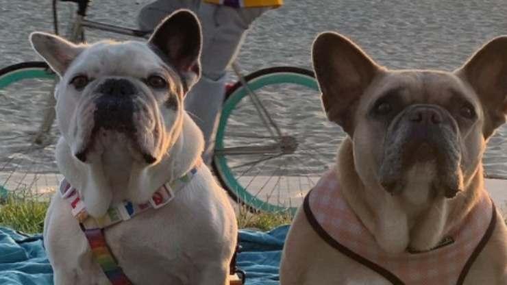 I cani della cantante (Foto Instagram)