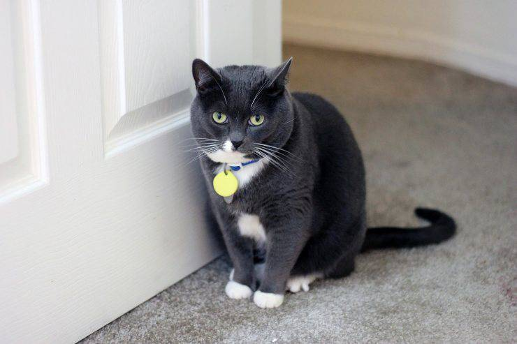Il gatto graffia le porte