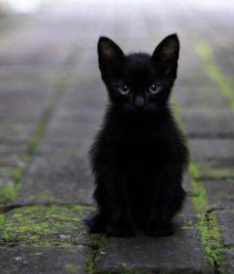 gattino (foto Pixabay)